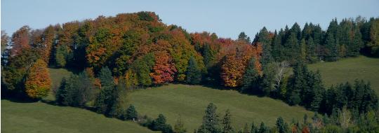 L'automne à St-Jacques | Crédit : J.P Adam